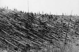 Trees blown over after the 1908 impact